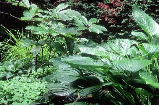Garten garten gr ne im schatten unter for Gartengestaltung schatten