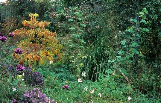 Klettergerüst Für Pflanzen : Garten groene.de :: gröne clematis und sassafras de
